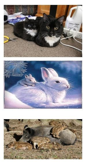 الحيوانات الولودة