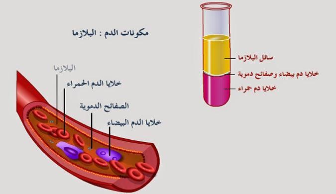 تمارين في الإيقاظ العلمي سنة 6 ـ محور الدم