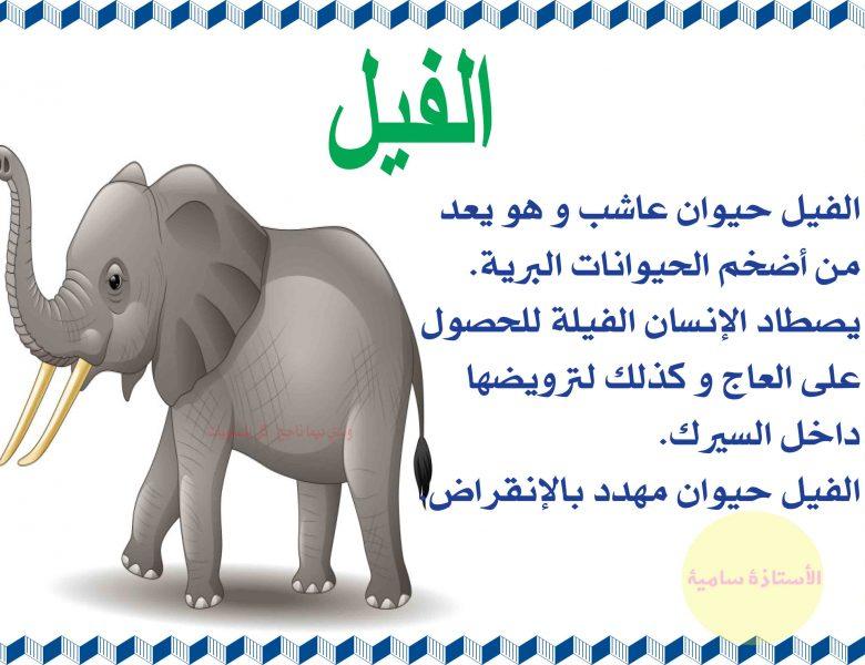 الحيوانات البرية و منافعها